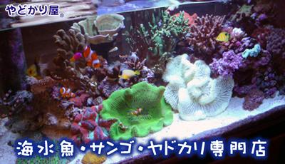 ショップ 海水 魚 神奈川県のおすすめ熱帯魚ショップ・販売店12選